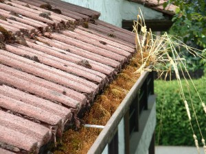 High level eaves trough full to overflowing with plant material.