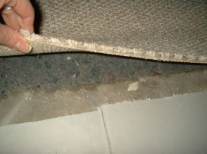 wet-basement-carpet-lg